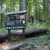 Dobročský prales - Čierny Balog